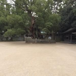 樹齢2600年といわれる楠木